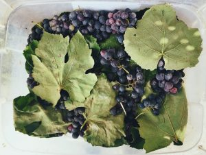 Red grapes with green grape leaves.