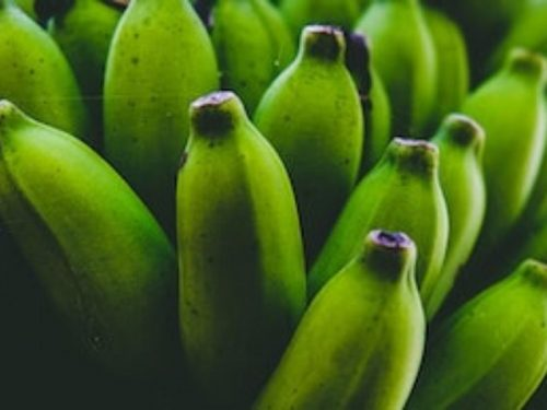 Close up photo of green bananas