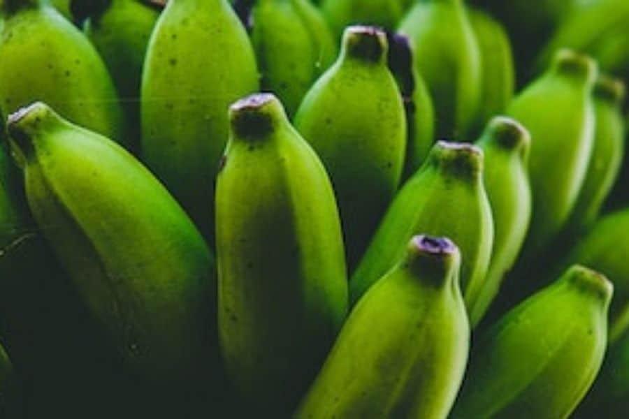 Close up photo of green bananas