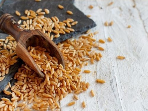CLOSE UP VIEW OF KAMUT GRAINS ON WHITE BACKGROUND