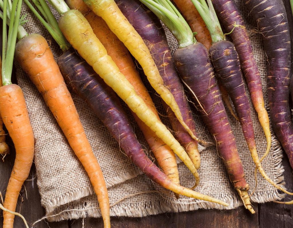 rainbow heirloom carrots in orange, white and purple colors.