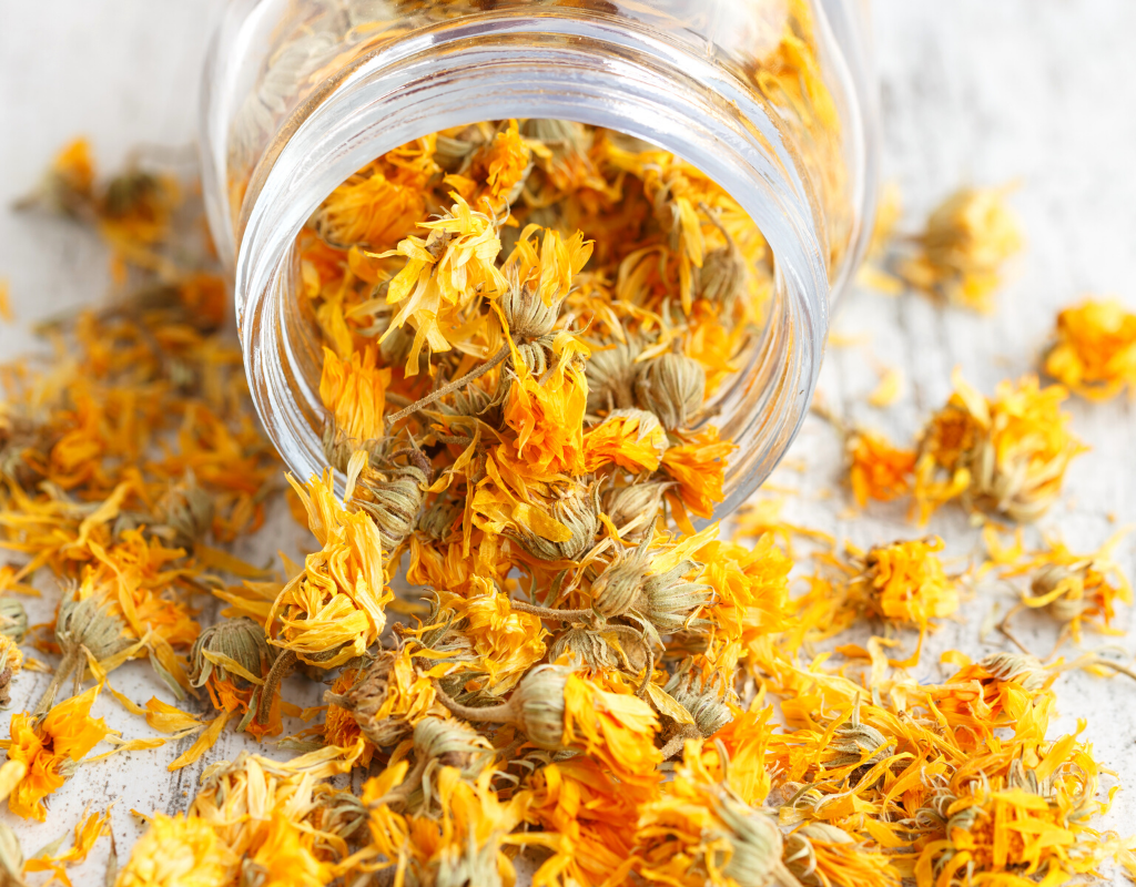 this saffron substitute is dried marigold blossoms in a glass jar spilled on a white background